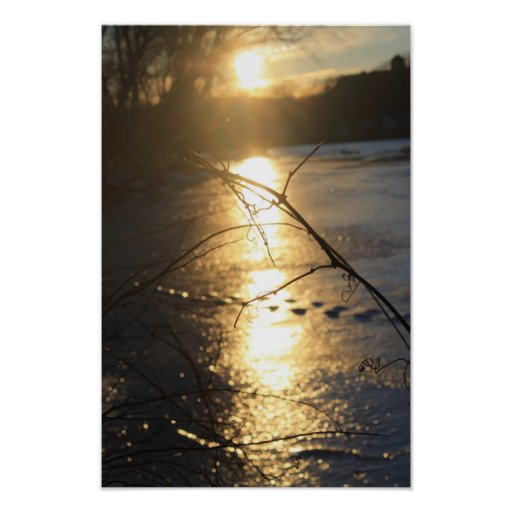 A vine on the banks of the frozen Fox River Poster