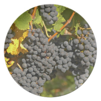 A vine with ripe Merlot grape bunches - Chateau Dinner Plates