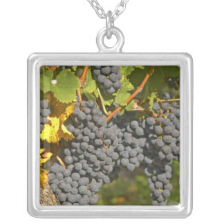 A vine with ripe Merlot grape bunches - Chateau Silver Plated Necklace