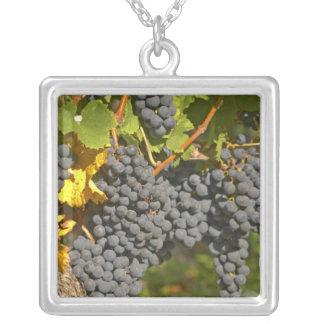 A vine with ripe Merlot grape bunches - Chateau Square Pendant Necklace