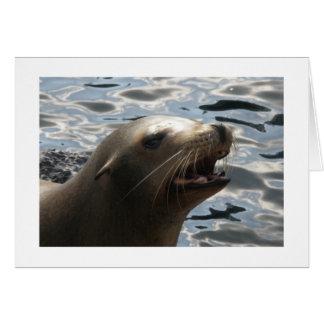 A Vocal Sea Lion Card