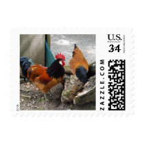 A Vorwerks Chicken pair, Rooster and Hen Eating Postage