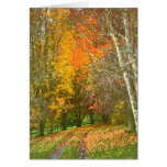 A Walk in Autumn Greeting Cards