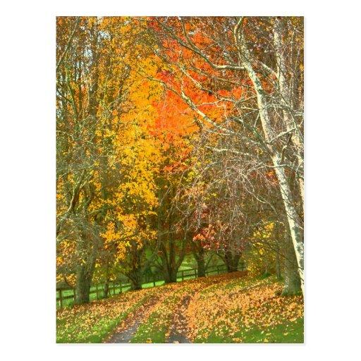 A Walk in Autumn Postcard