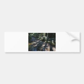 A Walk in Muir Woods Bumper Sticker