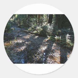 A Walk in Muir Woods Classic Round Sticker