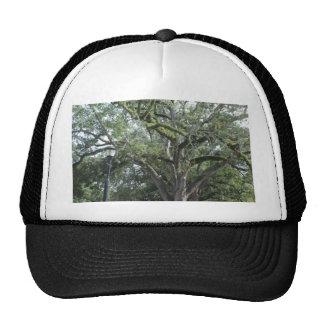 A Walk in the Park Trucker Hats