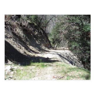 A Walk In The San Bernardino Mountains Postcard