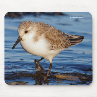 A Wandering Sanderling Mouse Pad