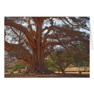 A Warka Tree Greeting Card