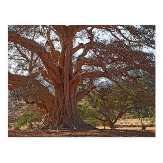 A Warka Tree Postcard