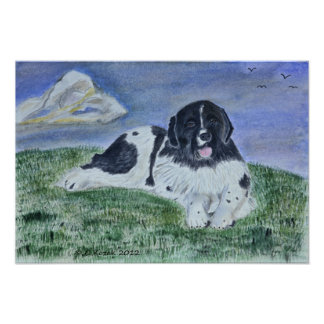 A watercolor Painting of a Landseer Newfoundland Poster