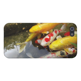 A waterway full of Japanese koi carps Cover For iPhone SE/5/5s