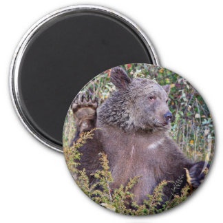 A Waving Grizzly Bear Magnet