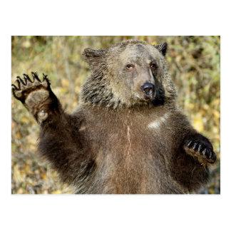 A Waving Grizzly Bear Postcard