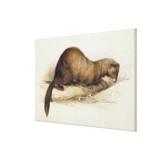 A Weasel, 1832 (w/c, pen, ink, gouache and gum ove Canvas Print