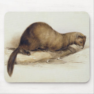A Weasel, 1832 (w/c, pen, ink, gouache and gum ove Mouse Pad