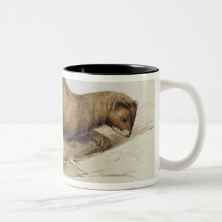 A Weasel, 1832 (w/c, pen, ink, gouache and gum ove Two-Tone Coffee Mug
