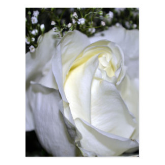 A Wedding Rose Post Card