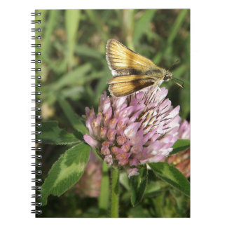 A wee moth on a wee flower spiral note book