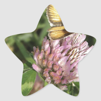 A wee moth on a wee flower star sticker