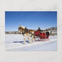 A Western Christmas - Horse Christmas Sleigh Holiday Postcard