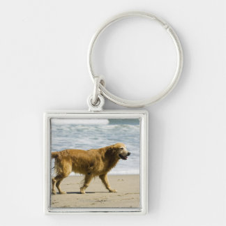 A wet dog at the beach. keychain