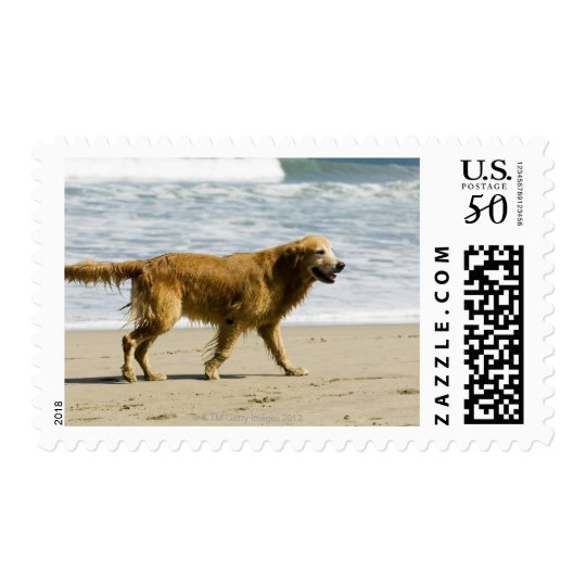 A wet dog at the beach. postage