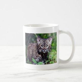 A Wet Little Bobcat Kitten Coffee Mug