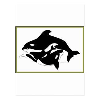 A Whale Family Postcard