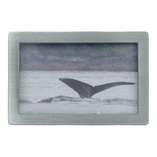 A whale tail buckle belt buckle