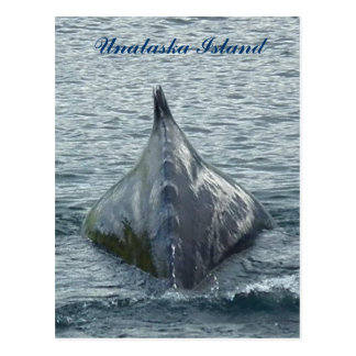 A Whale's Back in Unalaska Bay Postcard