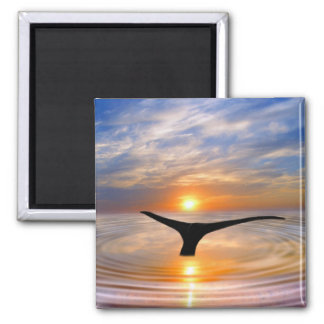 A whales tail at sunset 2 inch square magnet