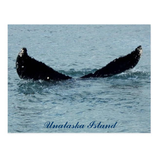 A Whale's Tail Flukes Postcard
