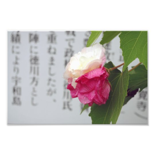 A white, a pink flower and Japanese characters Photo Print