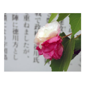 A white, a pink flower and Japanese characters Postcard