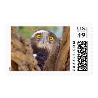 A White-breasted Snake Eagle Postage
