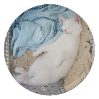 A white cat sleeping in a laundry basket, dinner plate