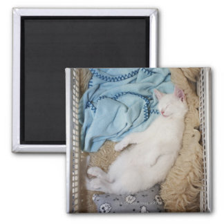 A white cat sleeping in a laundry basket, magnet