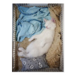 A white cat sleeping in a laundry basket, post card