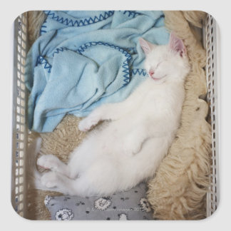 A white cat sleeping in a laundry basket stickers