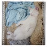 A white cat sleeping in a laundry basket, large square tile