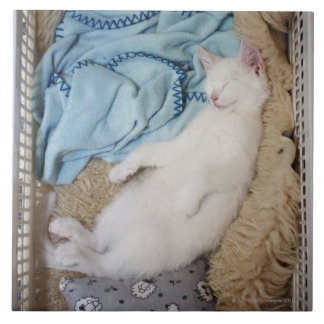 A white cat sleeping in a laundry basket, tile