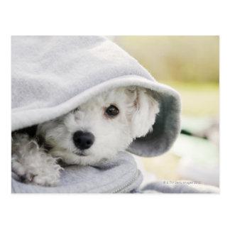 a white dog wearing a hood of shirt postcard