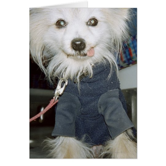 A white dog wearing clothes. card