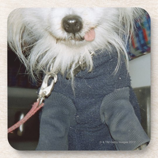 A white dog wearing clothes. drink coaster