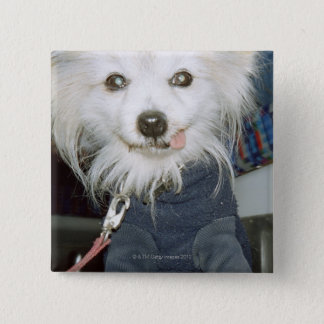 A white dog wearing clothes. pinback button