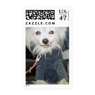 A white dog wearing clothes. postage