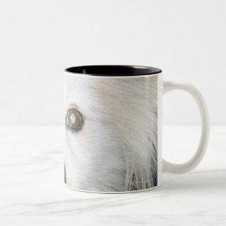 A white dog wearing clothes. Two-Tone coffee mug