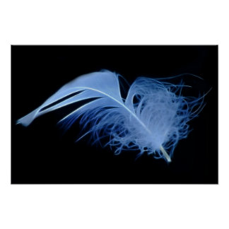 A white egret feather in black and white poster